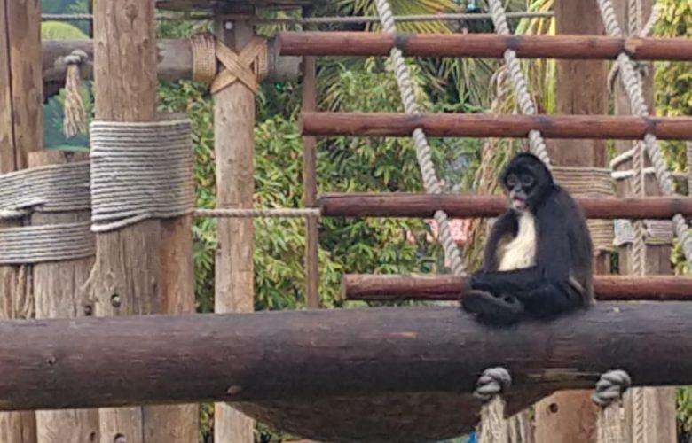 Más del 80 % de los animales rescatados de los circos fallecieron: AZCARM
