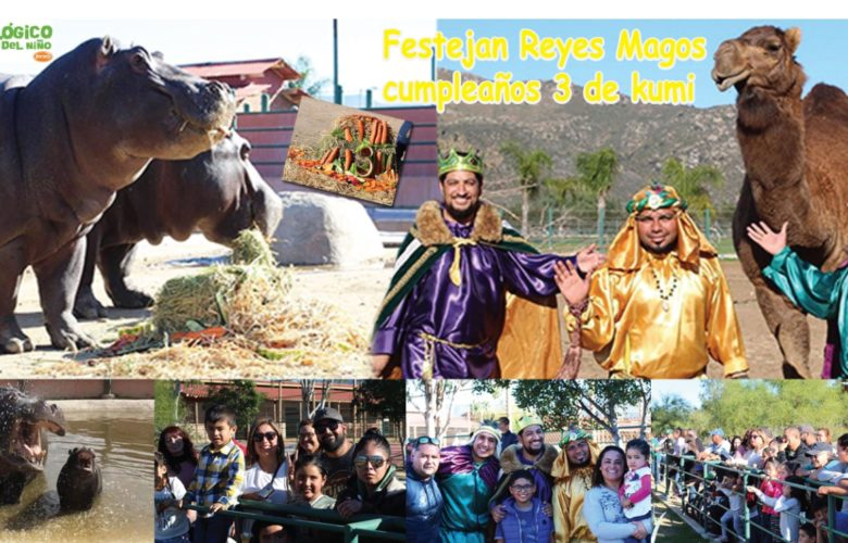 Festejan Reyes Magos cumpleaños 3 del hipopótamo Kumi