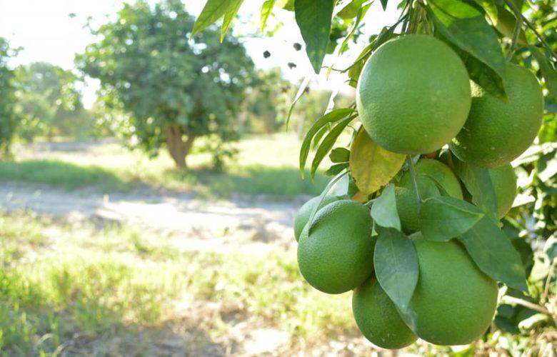 Secretaría del Campo pospuso convocatorias de apoyo para el sector agrícola por COVID 19