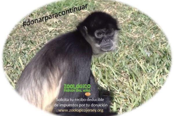 Pide Zoológico del Niño Jersey donaciones para salir adelante