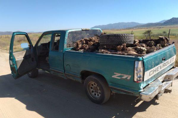 Abandonan camioneta con marihuana, yuca y un arma