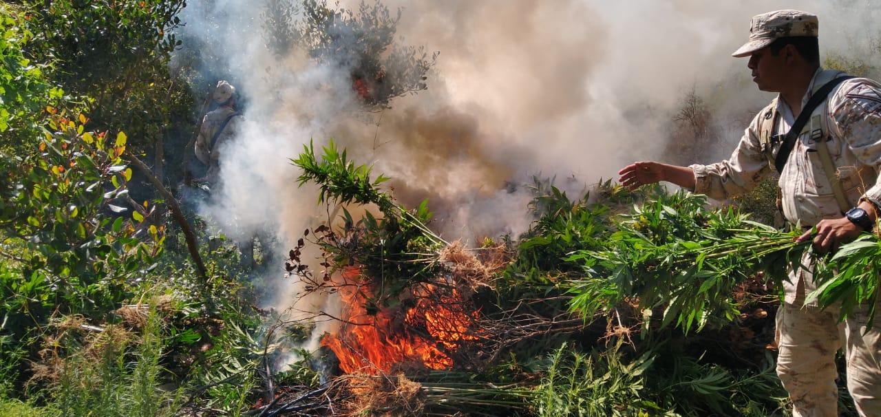 Militares localizan y destruyen plantíos de droga