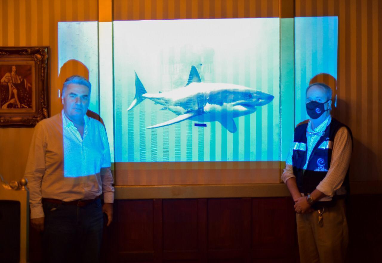 Solicitan Reanudar Actividad de Avistamiento del Tiburón Blanco