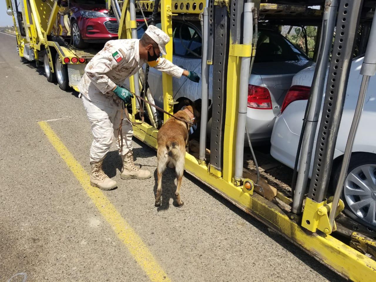 Militares adiestran binomios caninos contra el narco