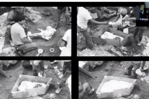 Destacan expertos potencial paleontológico del occidente mexicano