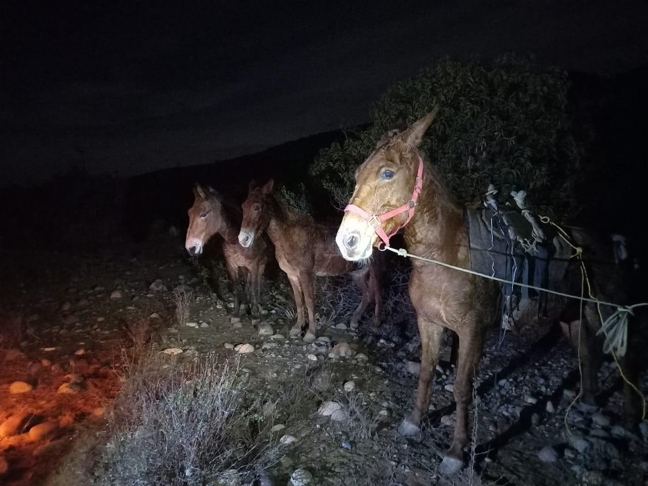 Narcos abandonan caballos que transportaban 400 kilos de marihuana