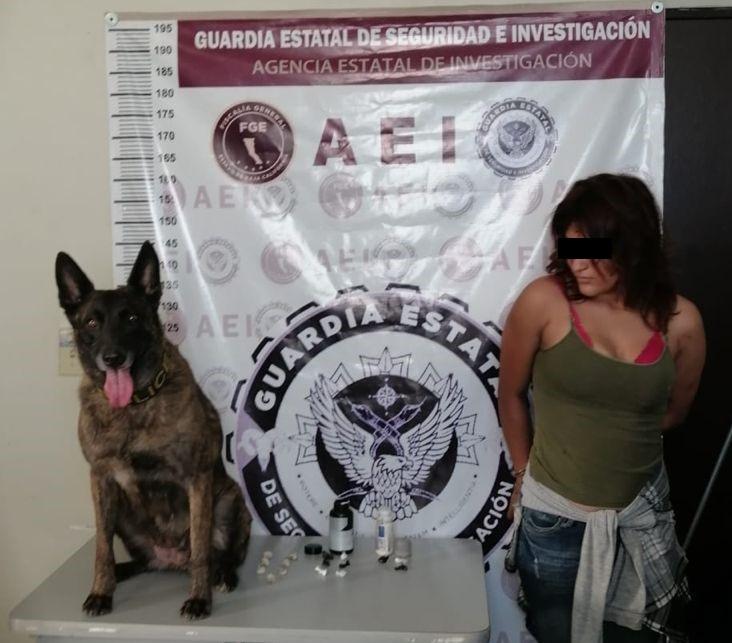 Con apoyo de la Unidad Canina K9 localizan droga en cateo y detienen a mujer
