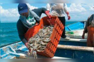 Se recupera certificación a camarón mexicano para exportar al mercado de Estados Unidos